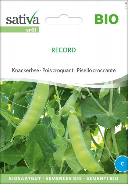Erbse 'Record' Samen, BIO Saatgut von Sativa