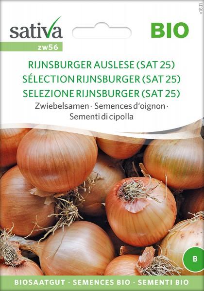 Zwiebel Rijnsburger Auslese (SAT25) Samen