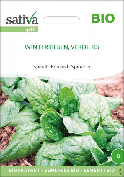 Spinat Winterriesen Verdil KS Samen