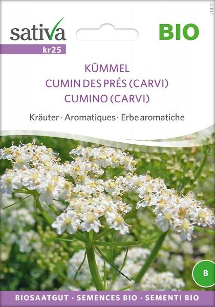 Kümmel BIO Samen von Sativa