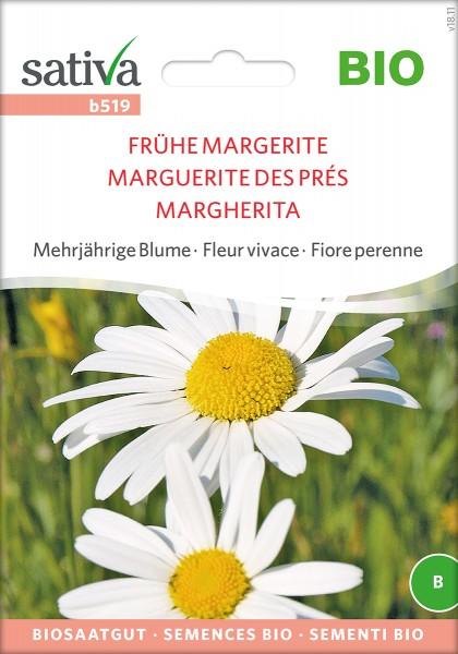 Frühe Margerite - BIO Samen von Sativa