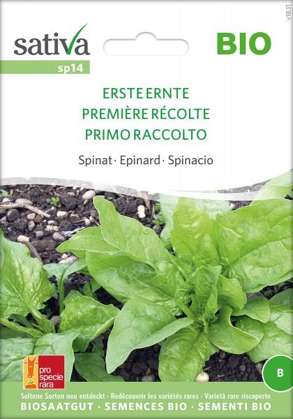 Spinat Erste Ernte Samen