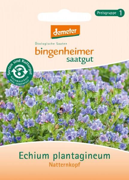 Natternkopf BIO Samen von bingenheimer saatgut