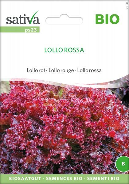 Pflücksalat Lollo Rossa BIO Samen