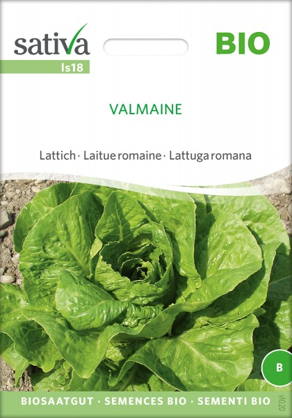 Lattich Valmaine Bio Samen