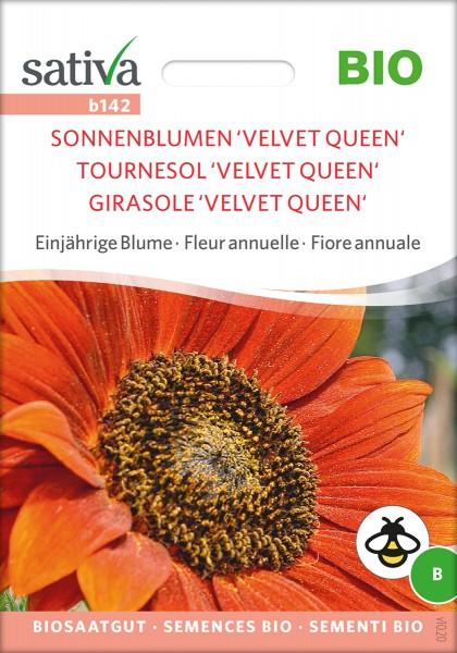 Sonnenblume Velvet-Queen BIO Samen