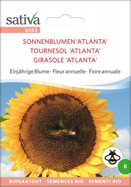 Sonnenblume Atlanta