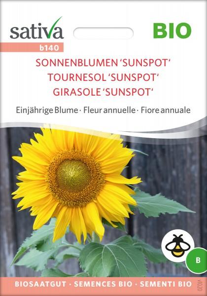 Sonnenblume Sunspot BIO Samen