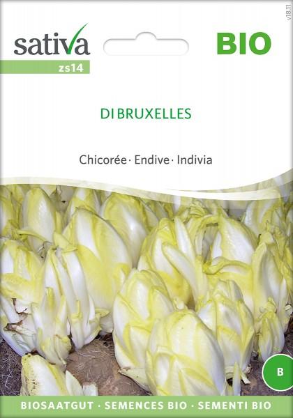 Chicorée Di Bruxelles BIO Samen