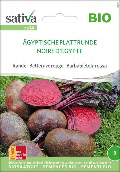 Rote Bete Ägyptische Plattrunde Samen