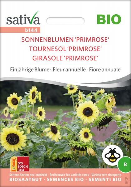 Sonnenblume Primrose Biosaatgut von Sativa