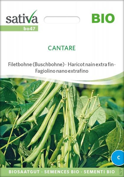 Bohne Buschbohne Cantare, BIO Samen von Sativa