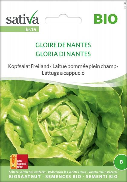 Kopfsalat 'Gloire de Nantes'