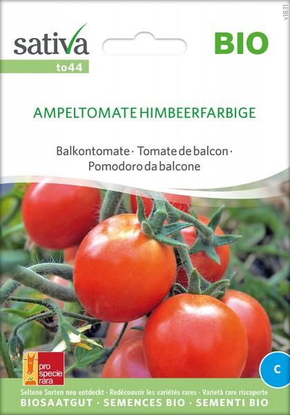 Tomate Ampeltomate Sativa