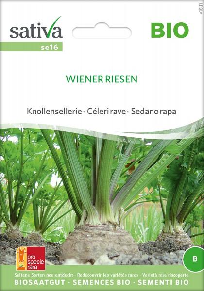 Konollen Sellerie Wiener Riesen Samen