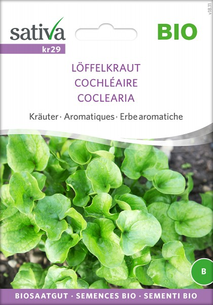 Löffelkraut Cochlearia officinalis