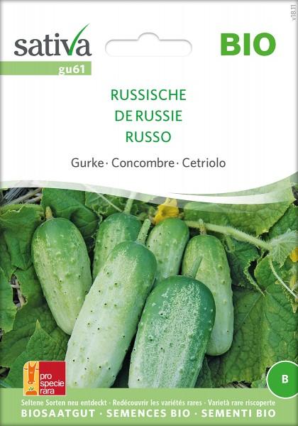 Gurke 'Russische' Samen