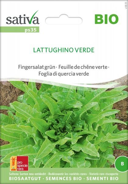 Pflücksalat Lattughino Verde Samen