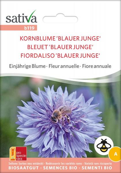 Kornblume Blauer Junge Samen