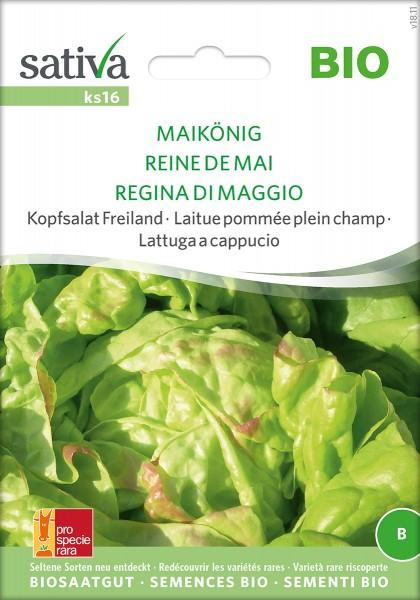 Kopfsalat Maikönig Sativa